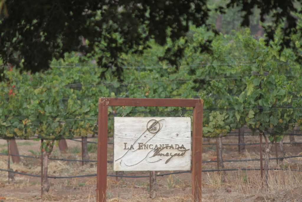 The two plots of La Encantada have 100 acres—almost all pinot noir
